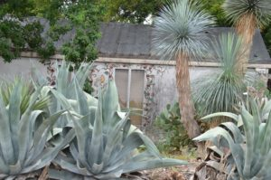 Picture of house in Alamo heights with yucca and southern plants.