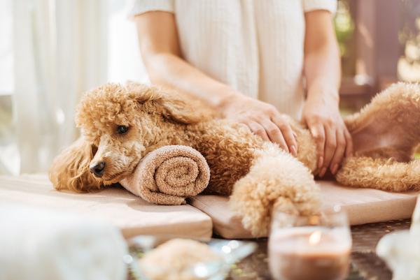 Pet Comfort