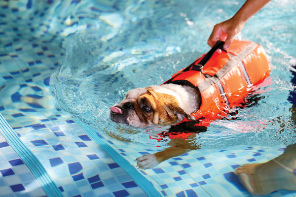 pup swimming with life vest on
