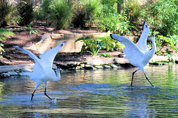 in the loop featured image - cranes at the Zoo